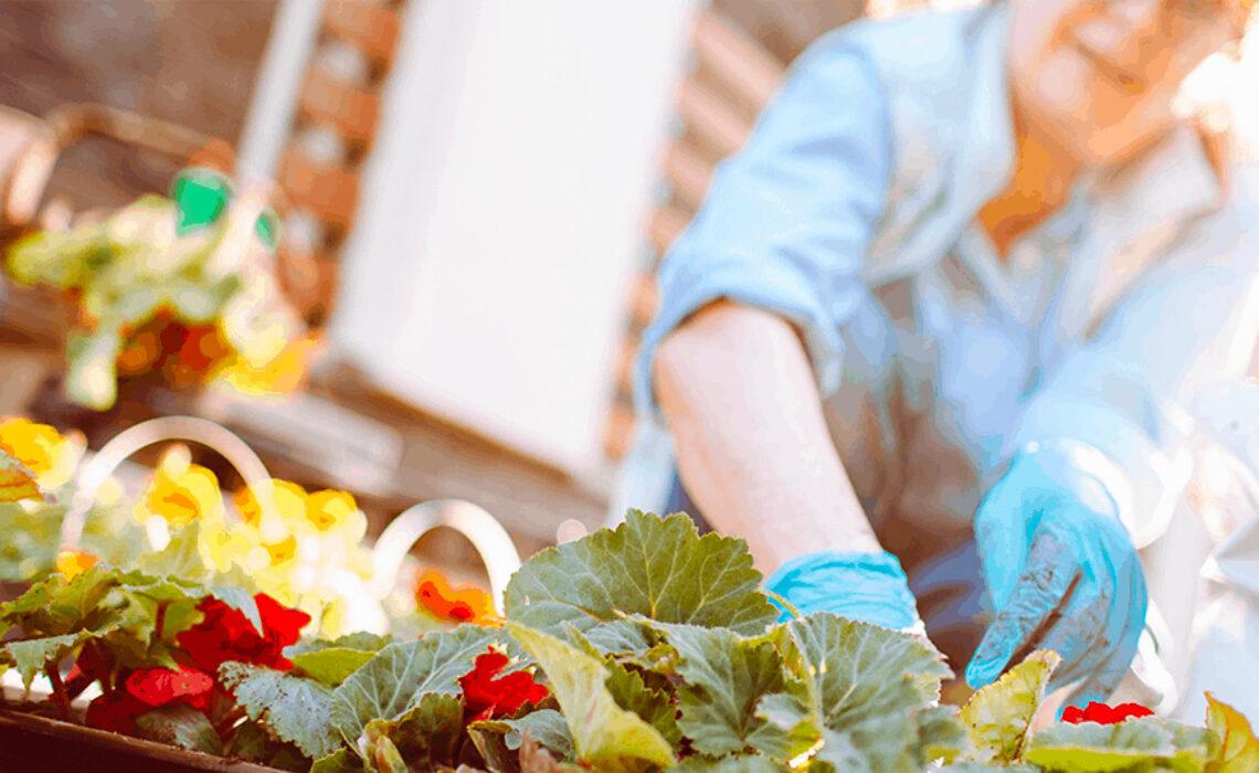 jardinagem-casa-de-repouso-sp